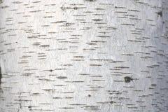Fondo natural de la textura de la corteza de abedul Imagen de archivo