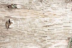 Fondo natural de la textura de la corteza de abedul Foto de archivo libre de regalías