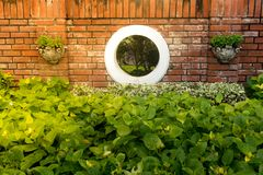 Fondo natural de la textura de la pared verde del arbusto con la tierra concentrada Foto de archivo