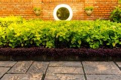 Fondo natural de la textura de la pared verde del arbusto con la tierra concentrada Fotografía de archivo