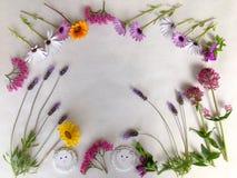 Fondo natural de las flores coloridas de la primavera en blanco imagen de archivo