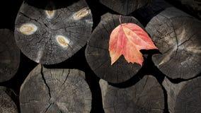 Fondo natural de registros de madera con una hoja del otoño deforestation serrería Construcción imagen de archivo