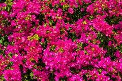 Fondo natural del color rojo Imagen de archivo