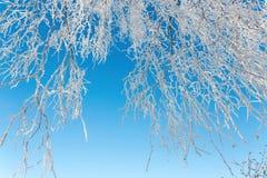 Fondo natural del invierno Imagenes de archivo