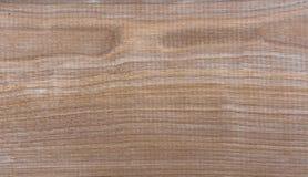Fondo natural del modelo de la textura del grano de madera de abedul de Taiga Imagen de archivo libre de regalías