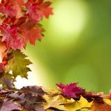 Fondo natural del otoño Foto de archivo