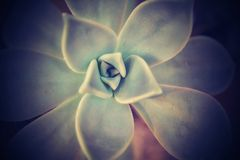 Fondo natural del succulent Foto de archivo
