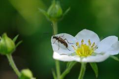 Fondo natural, escarabajo Imágenes de archivo libres de regalías