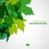 Fondo natural Fondo del vector con verde Fotos de archivo libres de regalías