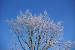 Fondo natural hecho de la rama de árbol congelada cubierta por el hielo y la nieve Imagen de archivo libre de regalías