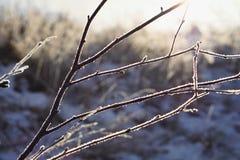 Fondo natural hecho de la rama de árbol congelada cubierta por el hielo y la nieve Imágenes de archivo libres de regalías