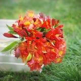 Fondo natural hermoso anaranjado rojo de Alstromeria Lily Flower Bouquet Green Grass entonado tiempo de verano de la primavera Im Fotos de archivo libres de regalías