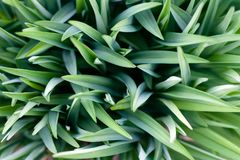 Fondo natural hermoso de la hierba verde para el dise?o foto de archivo libre de regalías