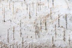 Fondo natural - la textura horizontal de un primer real de la corteza de abedul Fotografía de archivo libre de regalías