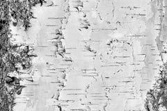 Fondo natural - la textura horizontal de una corteza de abedul real Imagen de archivo