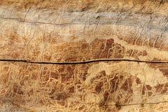 Fondo natural Madera de pino afectada por los insectos y los fenómenos atmosféricos en condiciones naturales imágenes de archivo libres de regalías