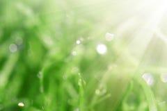 Fondo natural que empaña con los rayos del sol Fotos de archivo libres de regalías