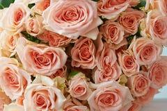 Fondo natural, rosas rosadas, textura de las rosas rosadas para la mesa, fondo Rosas hermosas y delicadas del espray Fotografía de archivo