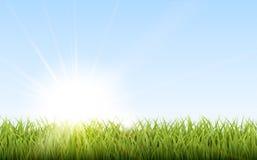 Fondo natural soleado con el sol y la hierba del vector Imagen de archivo