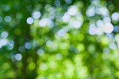 Fondo naturale astratto della sfuocatura, foglie defocused, bokeh verde Immagine Stock Libera da Diritti