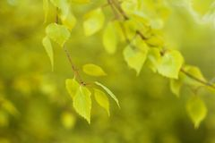 Fondo naturale Defocused della foresta di autunno nel giorno soleggiato immagine stock libera da diritti