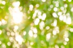 Fondo naturale del bokeh di aria aperta Fotografia Stock