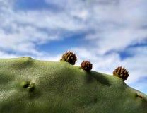 Fondo naturale del cactus con i fiori immagine stock