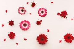 Fondo naturale del fiore delle rose, della gerbera e di Kalanchoe Immagini Stock