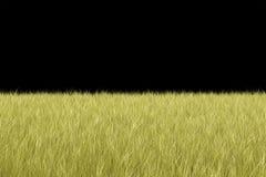 Fondo naturale dell'erba Immagine Stock Libera da Diritti
