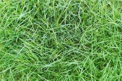 Fondo naturale dell'erba verde Immagini Stock Libere da Diritti