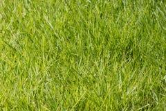 Fondo naturale dell'erba verde Fotografia Stock Libera da Diritti