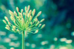 Fondo naturale delle foglie verdi e del fiore Bello fiore nel giardino al giorno soleggiato della primavera o di estate Effetto d Fotografie Stock Libere da Diritti