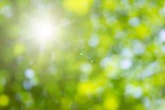 Fondo naturale di bianco delle foglie verdi immagini stock libere da diritti