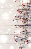 Fondo naturale di inverno Cratego rosso e legno bianco Fotografie Stock
