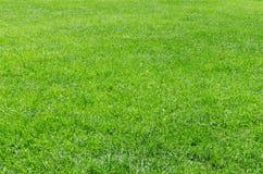 Fondo naturale fresco dell'erba di luce solare Immagine Stock