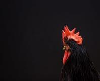 Fondo negro con un símbolo de 2017 - gallo Foto de archivo