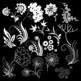 Fondo negro de los elementos del diseño floral Foto de archivo