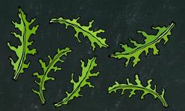 Fondo nero del bordo Insieme della rucola Rucola, Rocket Salad Fresh Green Leaves Erba aromatica Ingrediente di cottura fresco de Fotografie Stock Libere da Diritti