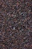 Fondo nero del primo piano di struttura della foglia di tè, grande macro modello verticale strutturato dettagliato del primo pian Fotografie Stock