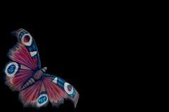 Fondo nero della farfalla. Fotografia Stock Libera da Diritti