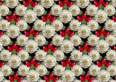 Fondo nero di grandi rose bianche del mazzo e dei germogli rossi Fotografia Stock Libera da Diritti