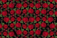 Fondo nero eterogeneo con le rose rosse ed i germogli Fotografie Stock Libere da Diritti