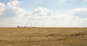 Fondo nublado del cielo azul del campo de trigo Fotografía de archivo libre de regalías