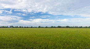 Fondo nublado del paisaje del cielo azul de la hierba verde del campo del arroz Fotos de archivo