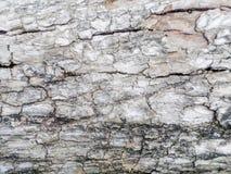 Fondo o struttura di legno della parete del bordo di legno incrinato Immagini Stock Libere da Diritti
