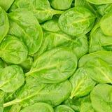 Fondo o struttura organico fresco degli spinaci del bambino. Alimento crudo. Fotografie Stock Libere da Diritti