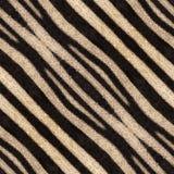 Fondo o struttura senza cuciture astratto delle bande della zebra Fotografia Stock