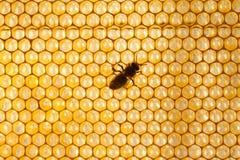 Fondo o textura del peine de la miel Fotos de archivo