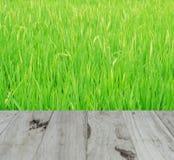 Fondo o textura en el arroz Foto de archivo libre de regalías