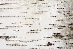 Fondo orgánico abstracto de una corteza de árbol de abedul Foto de archivo